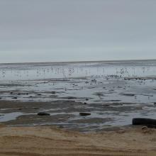 Flamingos and waders in the Walvis Bay lagoon.