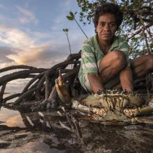 Mita from Ligau Levu Village expertly handles a freshly caught live aggressive mudcrab from the mangroves.