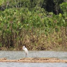 Laguna de Jatuncocha