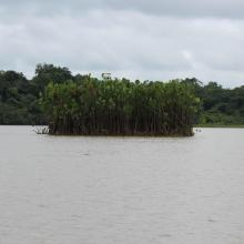 Laguna Jatuncocha, Parque Nacional Yasuní