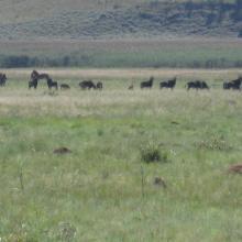 Vlei, Kgaswane Mountain Reserve