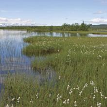 Mire and lake area with cottongrass.