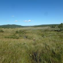 Large mire area at Hynna