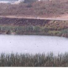 Laguna Las Conchas. 1999. Tiempo de secas.