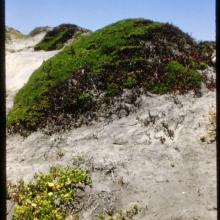 Dunes system.