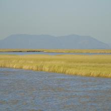 Tidal marshes