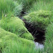 Ruisseau Fagnard