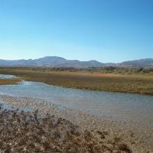 Estero Guadalupe