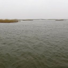 AL-Baghdadiya/ Central marsh/ Al-Nasiryah