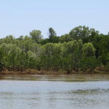 `Succession de mangroves