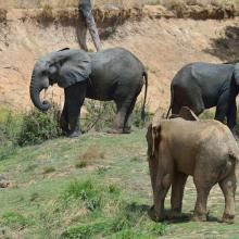 Photo 6 : Un troupeau d'éléphant en direction de la mare pour s'abreuver
