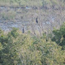 Cormorants. The photo was taken during a field study part of the preparation of the Ropotamo Reserve Management Plan.