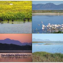 Various pictures at Strandfontein Birding Area