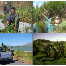 Management Activities in the False Bay Nature Reserve