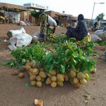 Photo 12: Aperçu des potentialités du site en Produits forestiers non ligneux (PFNL) précisément le fruit de Saba senegalensis dans la commune de Tchériba