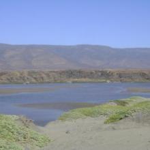 Vista panorámica del Humedal Huentelauquén, desde ribera norte