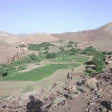 Agriculture en terrasses
