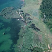 Détail de la réserve de la Baie d'Yvonand