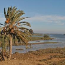 Marais de la Mékhada