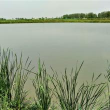 Aquaculture Pond at Keshopur-miani community reserve
