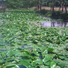 Lac Oubeira