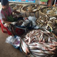Fish from Songkhram river at the local marketplace.