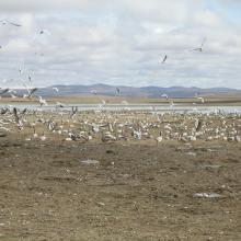 crowd of wetland birds