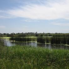 complexe de zones humides de guerbes sanhadja