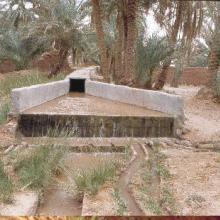 oasis de Sid Ahmed Timmi