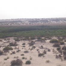 Sidi Slimane sud