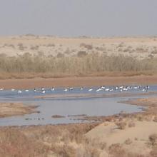 Chott Sidi Slimane