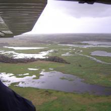 Vista aérea de islas de Selva Baja inundable en temporada de secas, indispensables para los ciclos reproductivos de diferentes especies de fauna silvestre