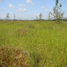 Oligomesotrophic sphagnum marsh Koziy Brid
