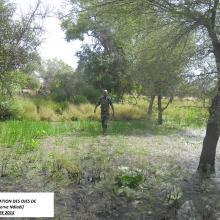 îlot de nidification des oies de Gambie(Sud réserve)