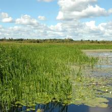 Floodplain meadows of the Berezina River are characterized by the exceptional variety of flora and fauna.