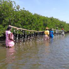 L'ostréiculture une activité génératrice de revenus et conservatrice de la mangrove