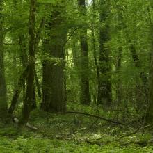 Floodplain (riverine) forest