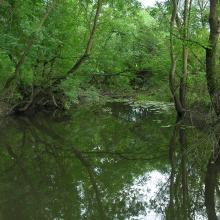 Quiet reaches of the Borzhava River