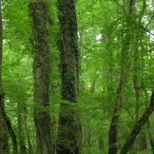 "Oak-ash forest in ""Atak"" area"