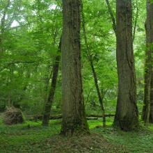 """Century-old forest of """"Atak"""" area"""
