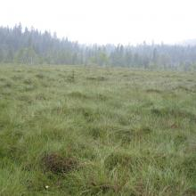 Mishok Bog: general view