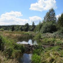 "The Site ""Black Bog"""