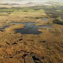 The Ugrai Meadow