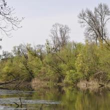 Belső-Béda oxbow (pond 2) in spring