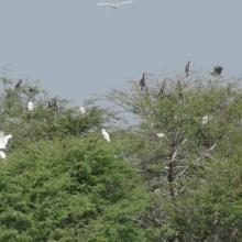 Dortoir des oiseaux d'eau au lac Magui