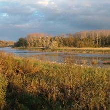The Nyéki Holt-Duna (oxbow) at Gemenc in autumn