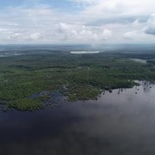 Riperian forest in flood period
