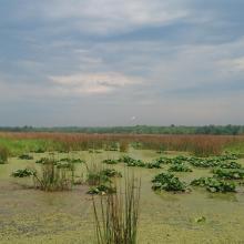 Poganovo Field