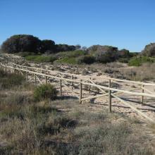 Salinas de Santa Pola. Itinerario de las dunas del Pinet