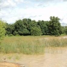 Végétation du lac Wegnia